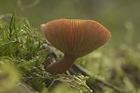Klik her for at se om svampe