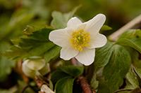 Klik her for at se om blomster
